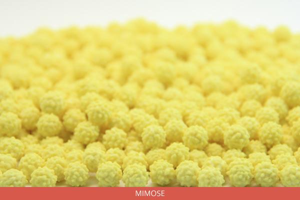 mimose-ambrosio
